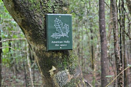 BRUNSWICK FOREST NATURE SIGN