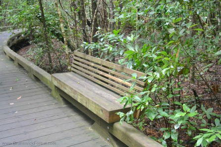 BRUNSWICK FOREST BENCH